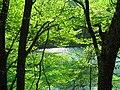 Pisztrángos tó, Szilvásvárad - panoramio.jpg