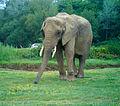 Planète sauvage - éléphant, vue de face.jpg