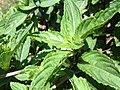 Plants (1)9.JPG