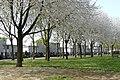 Plantsoen 't Blok Spring 2020 P1460842.jpg