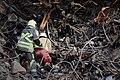 Plasco rescue operations and debris removal 44.jpg