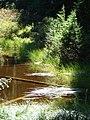 Pond (0f8749cc189348fa9109543db4ab36d6).JPG