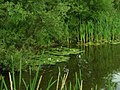 Pond of Uhtna - panoramio - Aulo Aasmaa.jpg