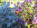 Potted Annuals (11430584605).jpg