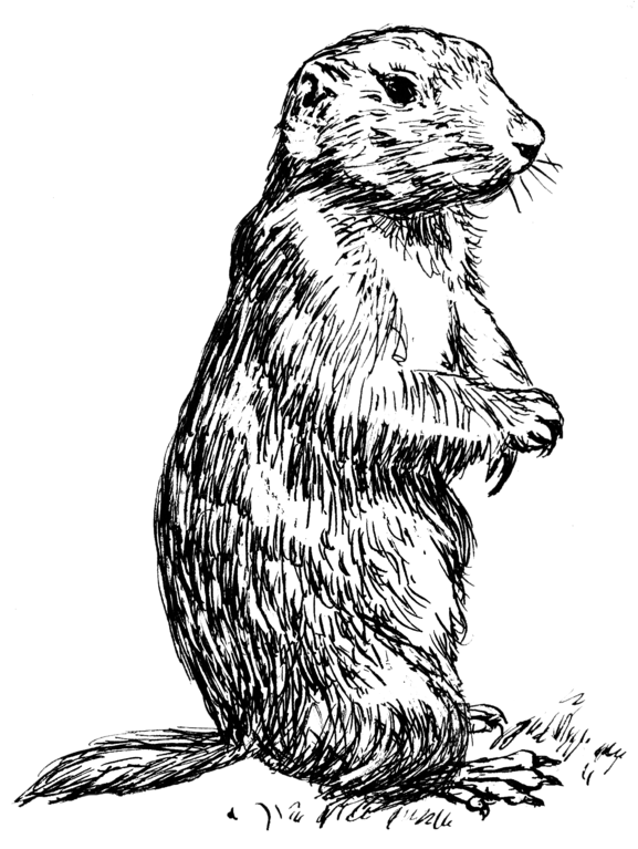 File Prairie Dog Psf Png Wikimedia Commons,How Long Do Cats Live In A House