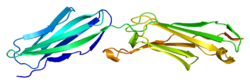Protein ICAM2 PDB 1zxq.png