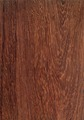 Pterocarpus santalinus Holz.tif
