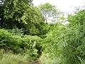 "Public ""path"" on Douglas Muir - geograph.org.uk - 502038.jpg"