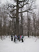 Pugachov's Oak and outdoor tourists around it.JPG