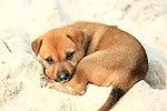 Puppy on Halong Bay.jpg