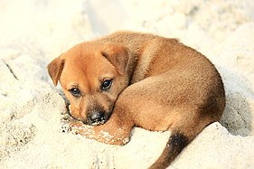 [Image: 281px-Puppy_on_Halong_Bay.jpg]