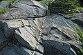 Quartz vein in sandstone (Thunderhead Sandstone, Neoproterozoic; Clingmans Dome, Great Smoky Mountains, North Carolina, USA) 3 (36845296192).jpg