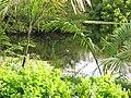 Queen Elizabeth Botanical Gardens 001.jpg