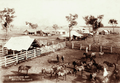 Queensland State Archives 2222 Horseyard and homestead at Retro Station 1897.png