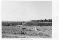 Queensland State Archives 4730 Clare irrigation tobacco farm c 1952.png