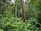Lush rainforest vegetation