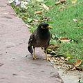 Rajpath bird.jpg