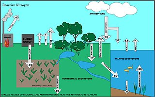 Nitrogen cycle Biogeochemical cycle by which nitrogen is converted into various chemical forms