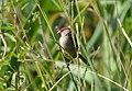 Red Beak - panoramio.jpg