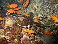 Red sea-reef 3575.jpg