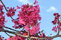 Redpinkflowers.jpg
