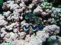 Reef2300 - Flickr - NOAA Photo Library.jpg