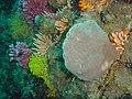 Reef scene at Klein Tafelberg DSC00355.JPG