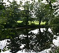 Reflected Trees - geograph.org.uk - 944651.jpg