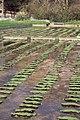 Regeneration of Watercress bed, Broad Chalke - geograph.org.uk - 401953.jpg