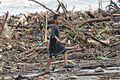 Resultados del Huracán Ingrid y tormenta Manuel (Acapulco, Guerrero) 24.JPG