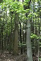 Rezerwat miodne 8.JPG