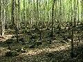Rezerwat przyrody Bagno Jacka (Wesoła) 2.jpg