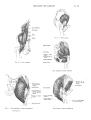 Richer - Anatomie artistique, 2 p. 59.png