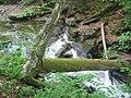 Ricketts Glen State Park Timber.jpg