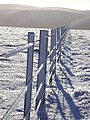 Rime Frost on the fence to Cairn Law - geograph.org.uk - 762882.jpg