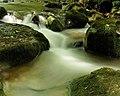 River Clywedog, Plas Power Woods - geograph.org.uk - 1275666.jpg