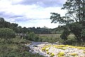 River Fiddich - geograph.org.uk - 265015.jpg