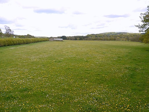 Riverside meadow near Bardon Mill - geograph.org.uk - 1864770