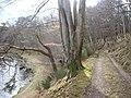 Riverside track - geograph.org.uk - 1184749.jpg