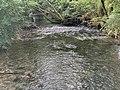 Rivière Versoix Sauverny Ain - 2020-08-16 - 4.jpg