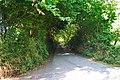 Road south of Moretonhampstead - geograph.org.uk - 43263.jpg