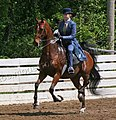 Rock Creek Spring Horse Show 2008 (2674577496).jpg