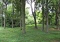 Rocks Plantation - geograph.org.uk - 1354377.jpg
