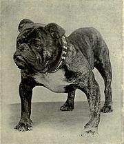 CH Rodney Stone 1907