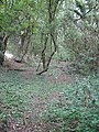 Roman Road at Colliers End - geograph.org.uk - 214359.jpg