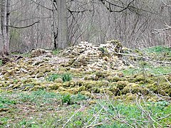 Roman Villa remains in Spoonley Wood - geograph.org.uk - 2878295.jpg