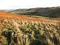 Rough grazing and bracken at Turf Knowe - geograph.org.uk - 640898.jpg