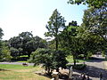 Royal Botanic Gardens Sydney 03.JPG