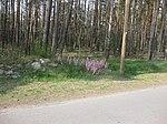Ruhland, Grenzstr., Waldrand gegenüber Hausnr. 3, Mandelstrauch blühend, Frühling, 08.jpg