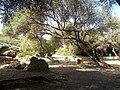 Ruines Romaines Tipaza 35.jpg